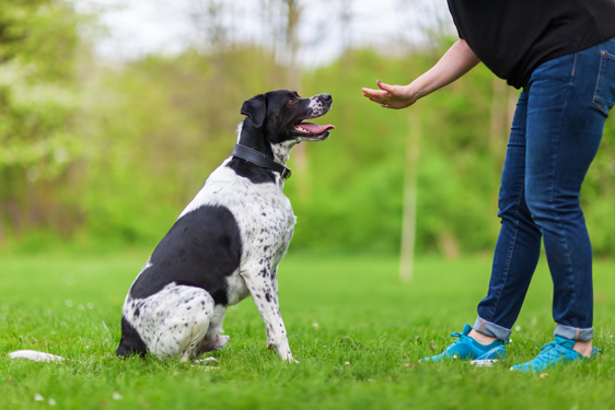Trainer giving a command to dog